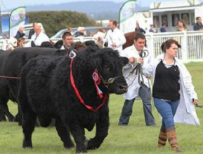 Anglesey Show Ground connects to the Fibrespeed network